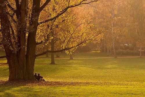 un albero in un parco