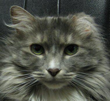 about-us - Spokane, WA - Hunter Veterinary Clinic