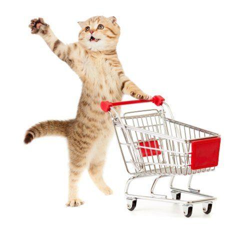 un gatto che spinge un carrello