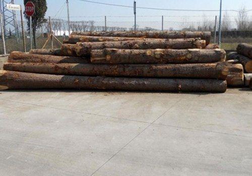 pila di tronchi d`albero  tagliati appoggiati per terra all'aperto