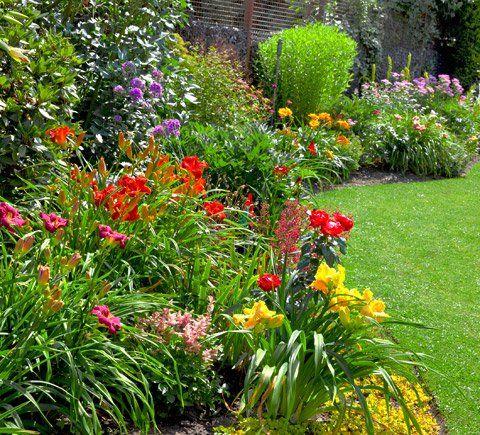 Giardino con le piante fiorite