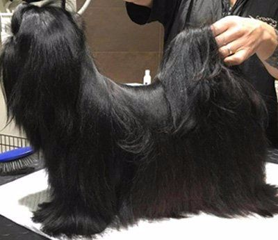 cagnolino nero che viene pettinato