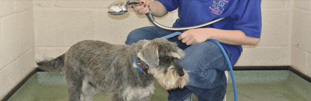 Cat coarding - Gloucester, Gloucestershire - BJ Boarding Kennels & Cattery - Dog