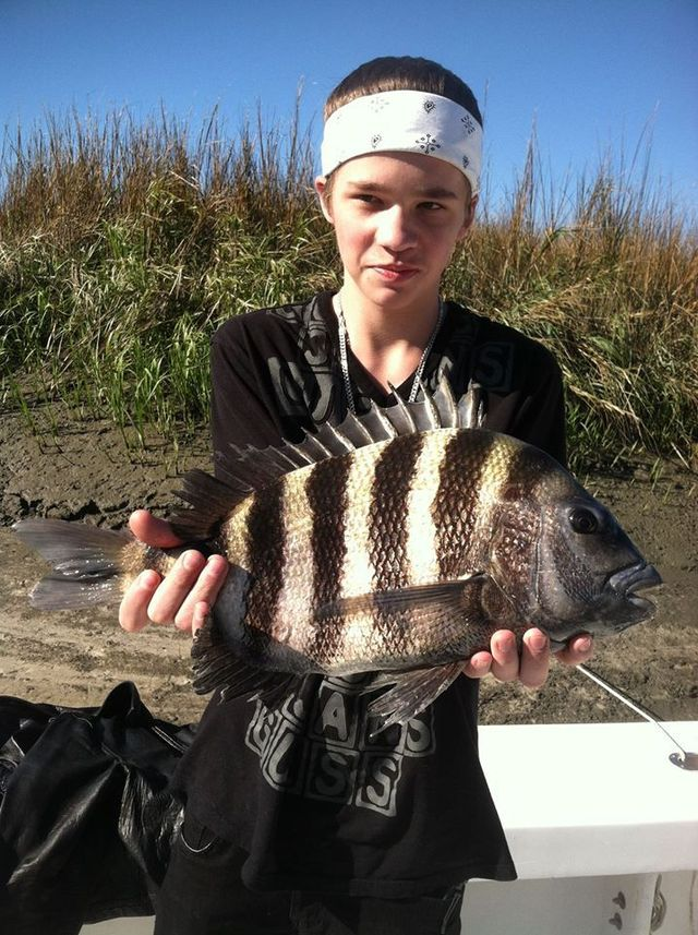 Sheep head fishing,fishing sheephead,st simons fishing sheep head,