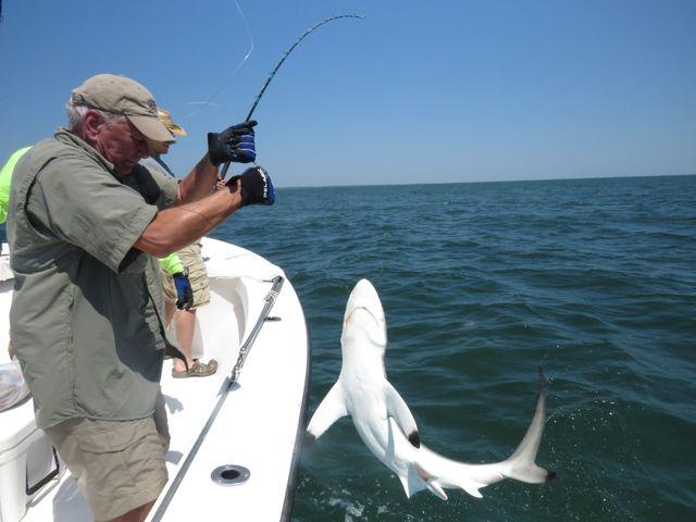 shark fishing in the golden isles, ga fishing in the coasatl waters