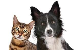 Veterinarians garden grove ca community veterinary hospital for Garden grove dog and cat hospital