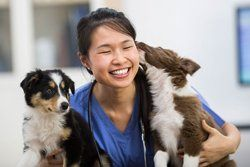 About Us | 24-Hour Animal Hospital for Amherst, Niagara