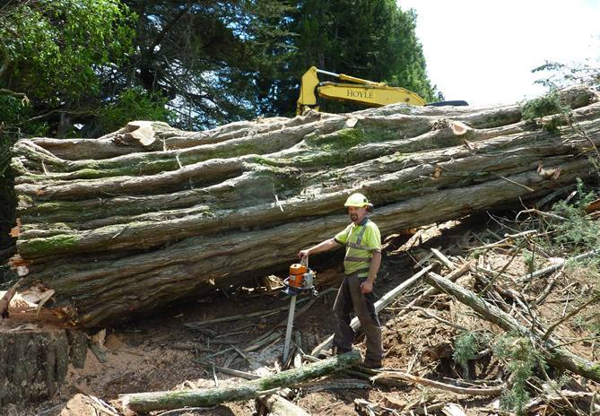 Call For Rural Tree Felling And Earthworks In Waikato