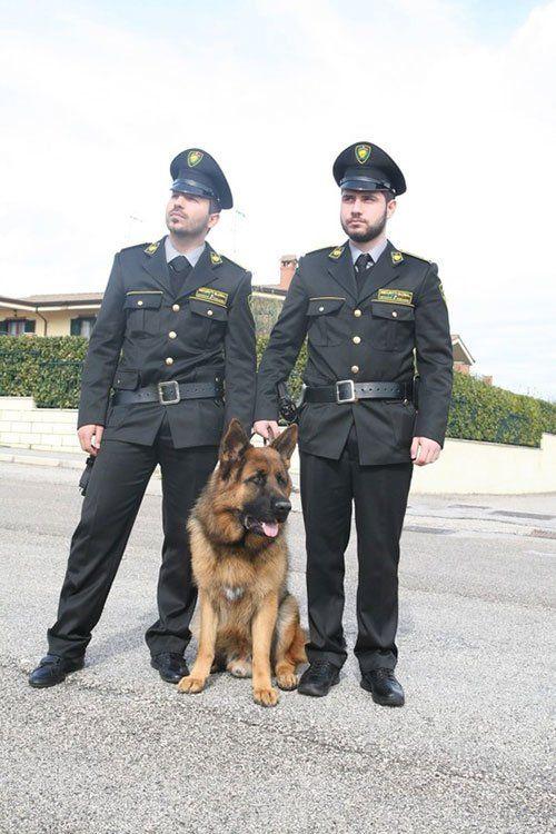 Security Global offre anche servizi cinofili a Frosinone
