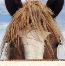 General health checks for horses