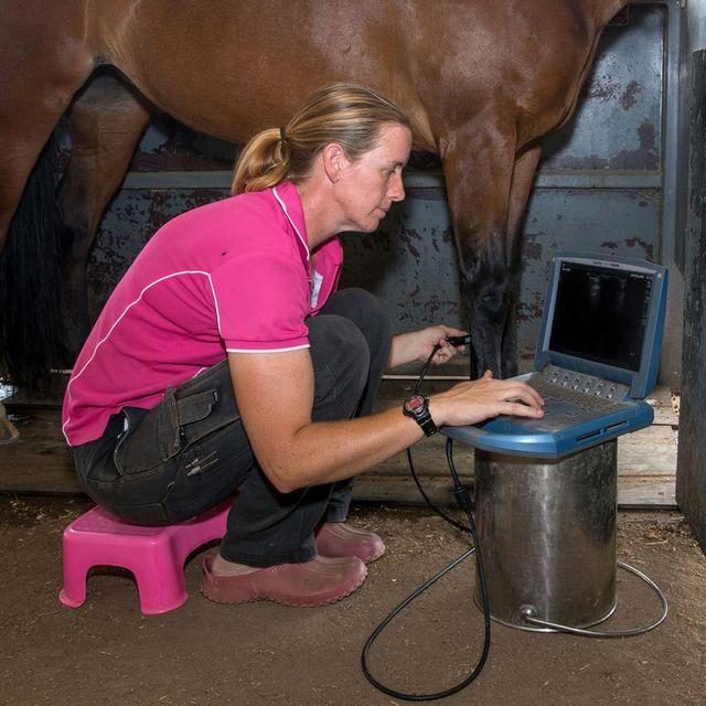 Horse ultrasounds