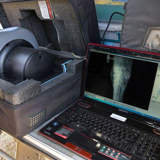 Digital x-rays for horses
