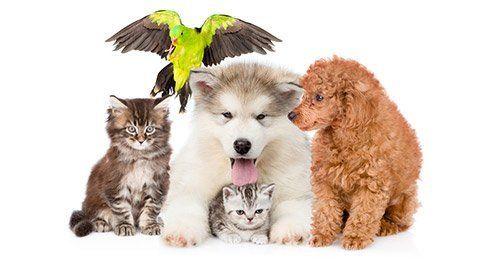diversi cuccioli di animali