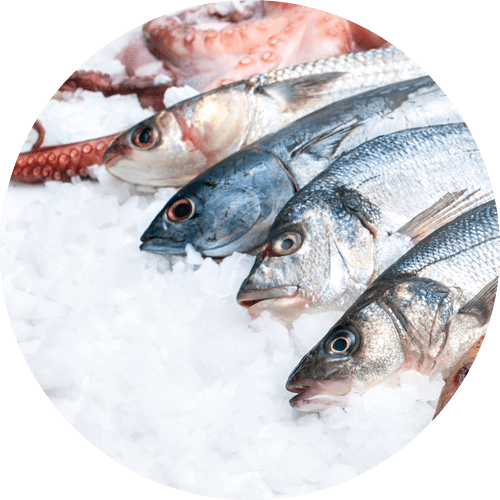 Fish Bait Supply & Delivery | BOP & Waikato | Klassic Ice