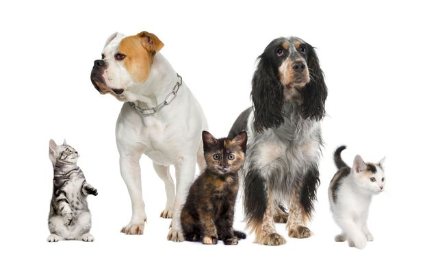 View of a ratio of dogs to cats