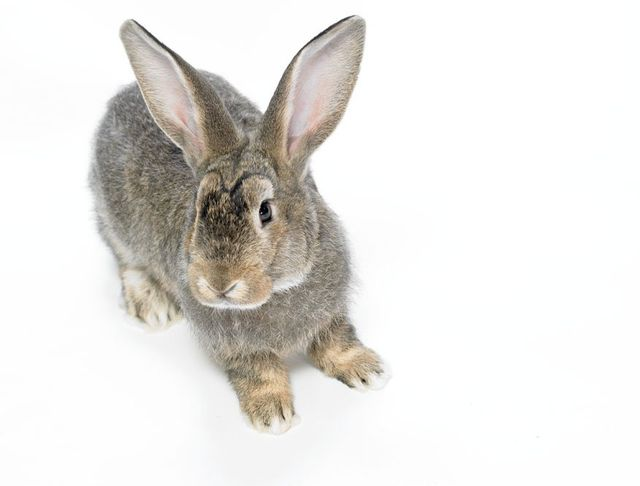 View of a Rabbit