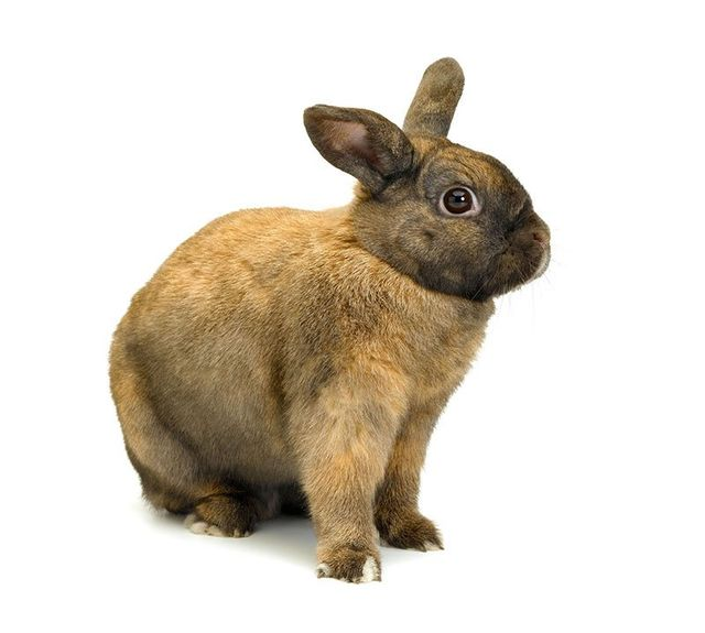View of a light greyish rabbit
