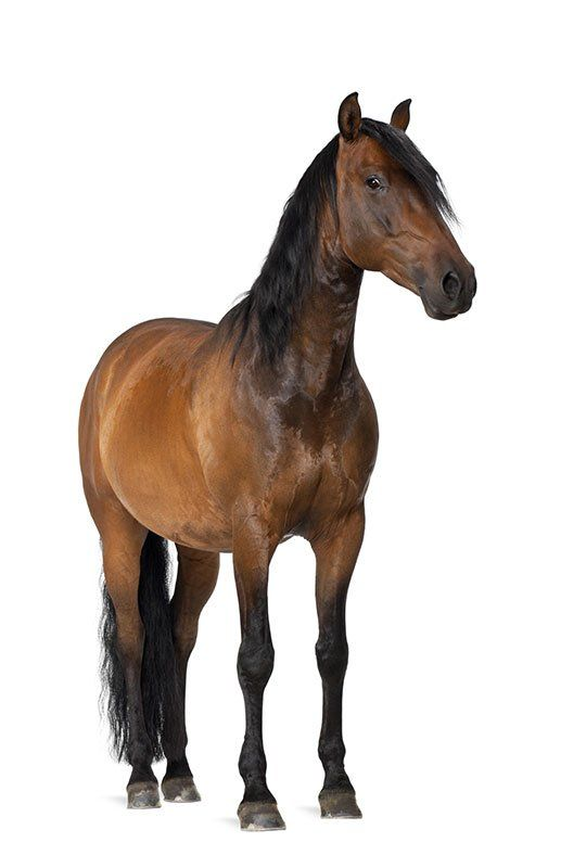 View of a golden brown horse