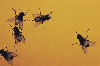 Bug Control Buffalo, NY