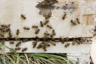 Bee Control & Exterminating Buffalo, NY