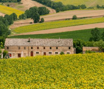 Agriturismo La Collina degli Olivi