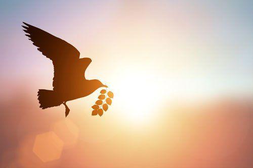Una colomba che vola con un ramoscello nel becco
