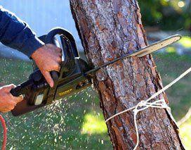 Emergency Tree Removal Fredonia, NY