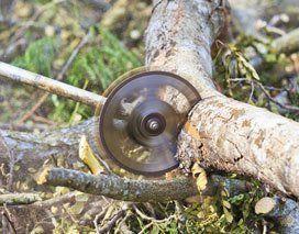 Emergency Tree Removal Chautauqua, NY