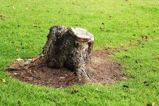 Tree Service Fredonia, NY