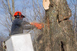 Emergency Tree Removal Jamestown, NY