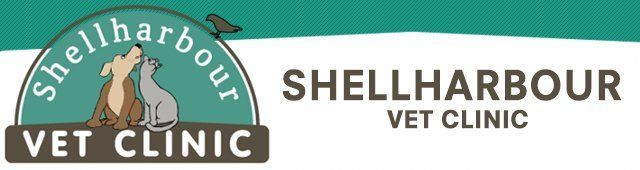 shellharbour veterinary clinic