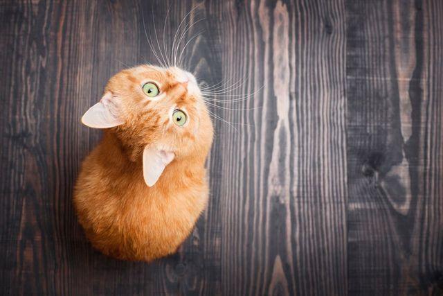 kitten on wood floor