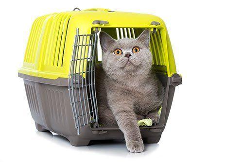 Grande gatto rinchiuso in una gabbia di viaggio nera e gialla