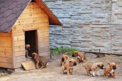 Casetta di legno e cuccioli giocando intorno