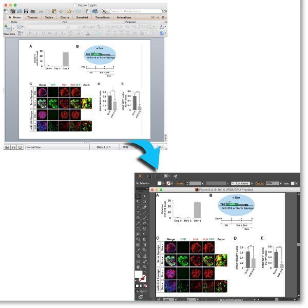 Powerpoint to Adobe Illustrator image by Simplified Science Publishing