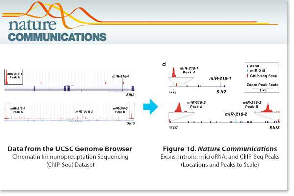 Data visualization of genomic sequencing data by Simplified Science Publishing.