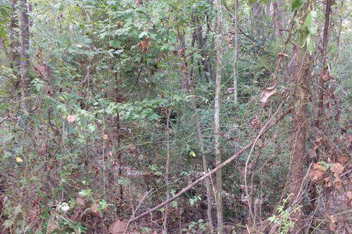 under brushing - Charleston, Summerville, Mt. Pleasant, Moncks Corner SC