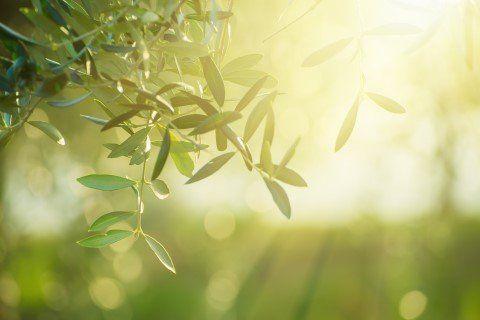 raggio di sole su pianta