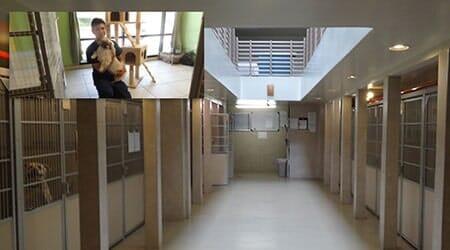 Pet Boarding - Rancho Cucamonga, CA - Baseline Animal Hospital