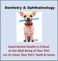 Animal Hospital - Rancho Cucamonga, CA - Baseline Animal Hospital