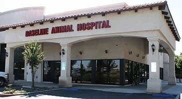 Animal Hospital Services Rancho Cucamonga Ca Baseline