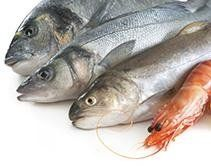fornitore pesce