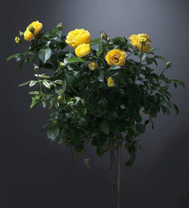 dei fiori gialli