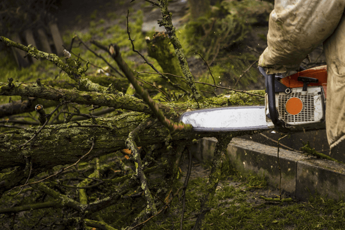 tree branches being cut