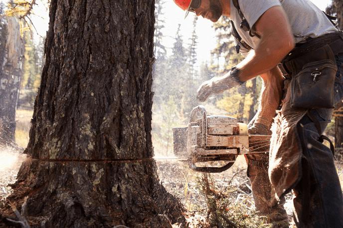 reshaping tree