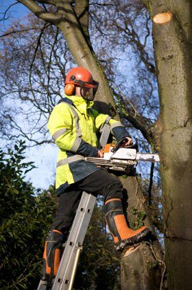 Specialist shrub pruning - South London and Kent - ISC Tree Specialists Ltd - Felling