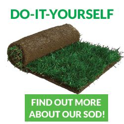 Sod Installation Landscaping Sod Suppliers Landscaping