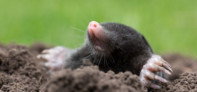 Mammal and rodent control | Aardvark Pest Control Services