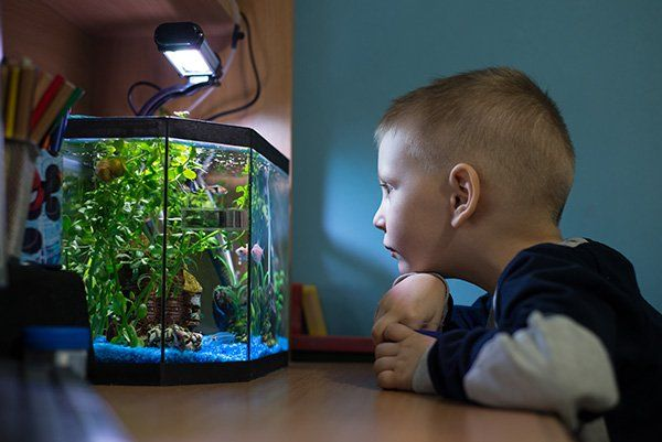 Bambino che guarda un acquario