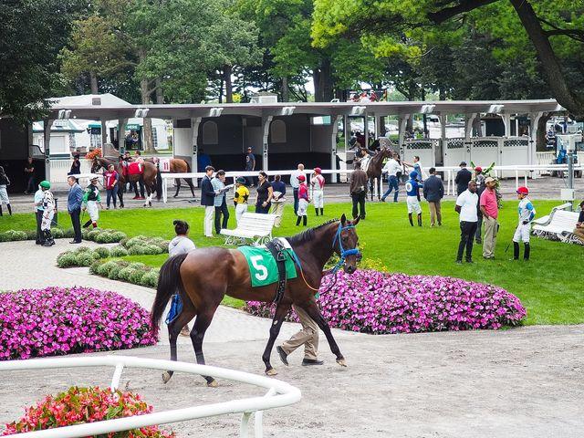 Horse Racing Picks